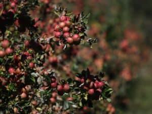 Apple Cider Vinegar Treatment