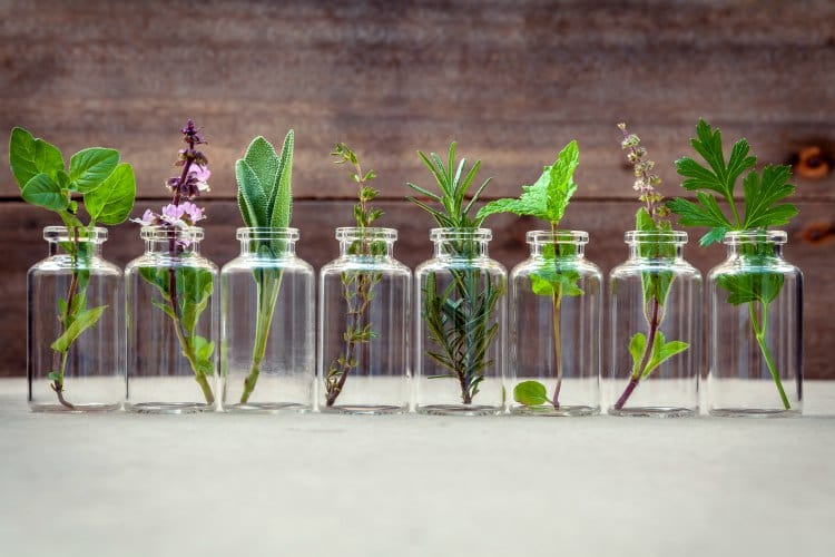 Making Sense of Scents: Diffusing Essential Oils