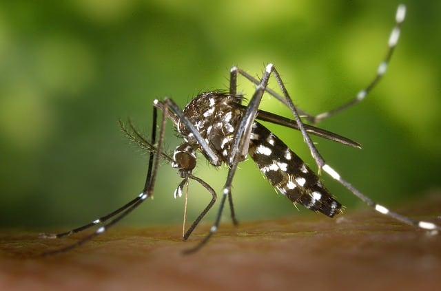 repel insects with the help of citronella essential oil