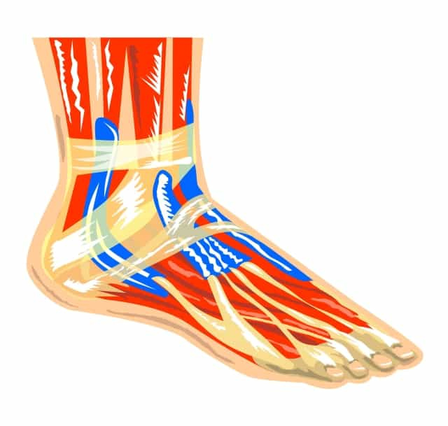 ALA can provide Providing Relief From Neuropathy