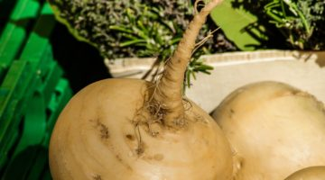 A Look at Maca Root Benefits