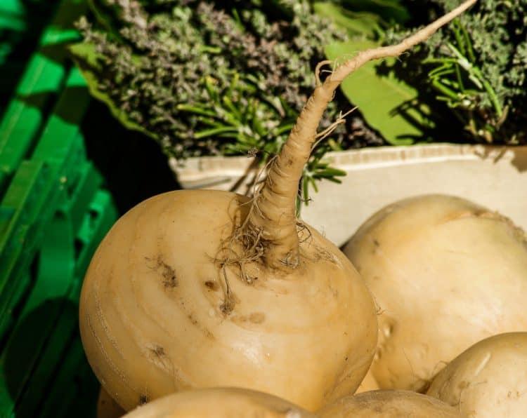 A Look at Maca Root Benefits