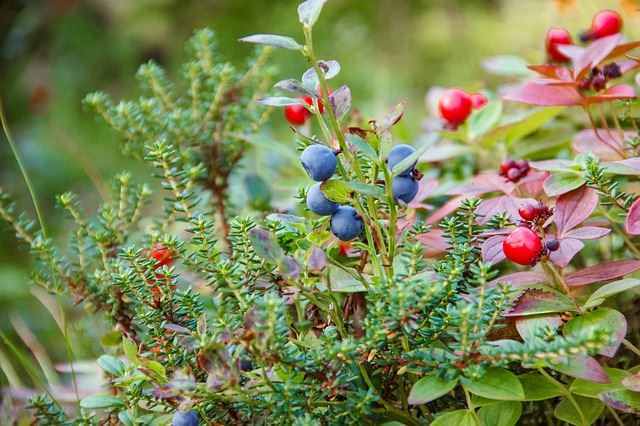 Juniper has antirheumatic and antispasmodic properties which provide pain relief